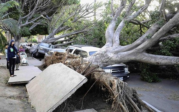 Storm in West Los Angeles: knocked down dozens of trees, 8 thousand man there is no light