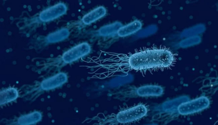 Scientists have learned to look for bacteria that generate electricity