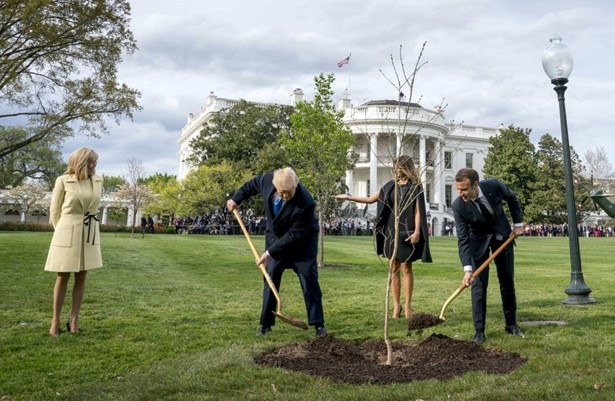 Oak planted by Trump and Macron died