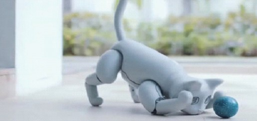 A Chinese company has created a robot cat