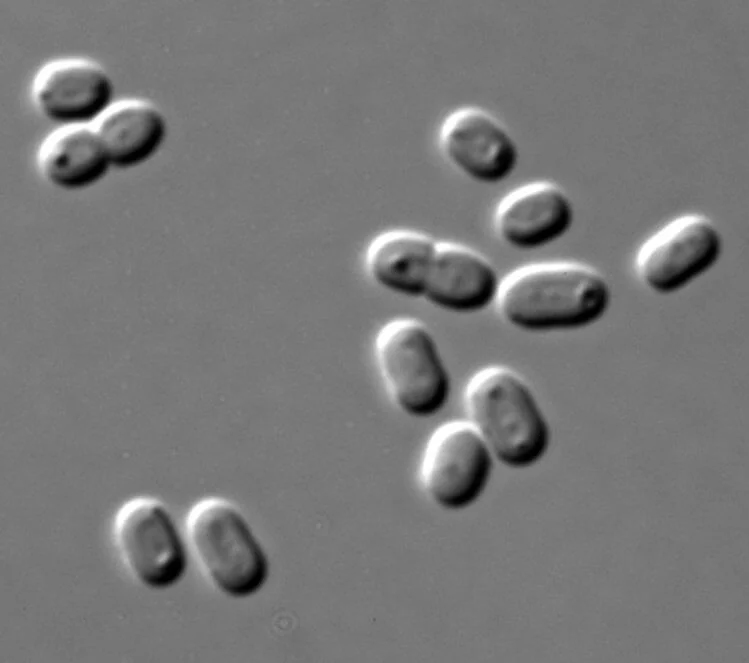 Synechococcus, predominantly live in the aquatic environment
