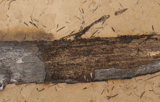 Scientists have found petrified wood resin 110 million years old