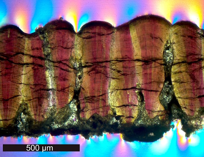 Dinosaur eggshell helped prove that they were warm-blooded