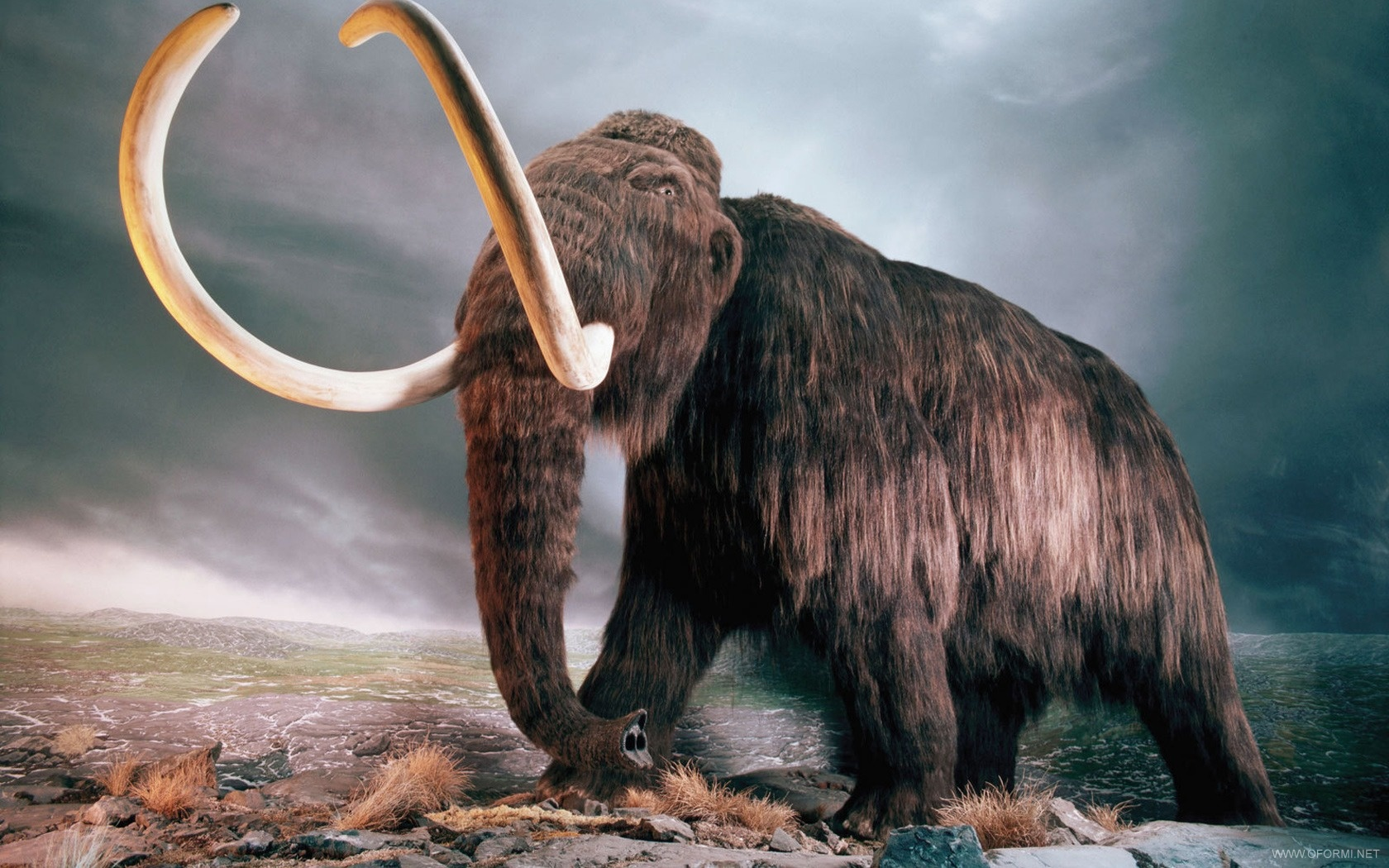 """Scientists """"revived"""" mammoth genes"""