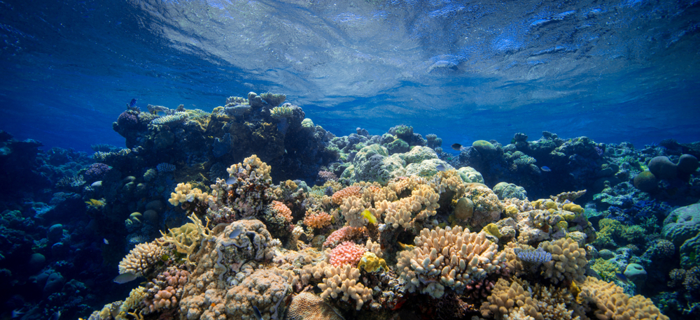 Ancient corals told the story of El Nino hundreds of years ago