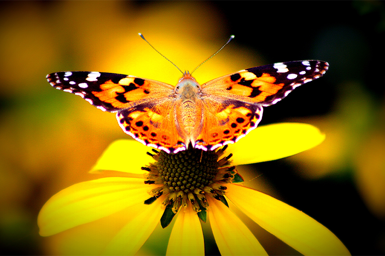 The warm summer of 2019 has a record increase in the butterfly population