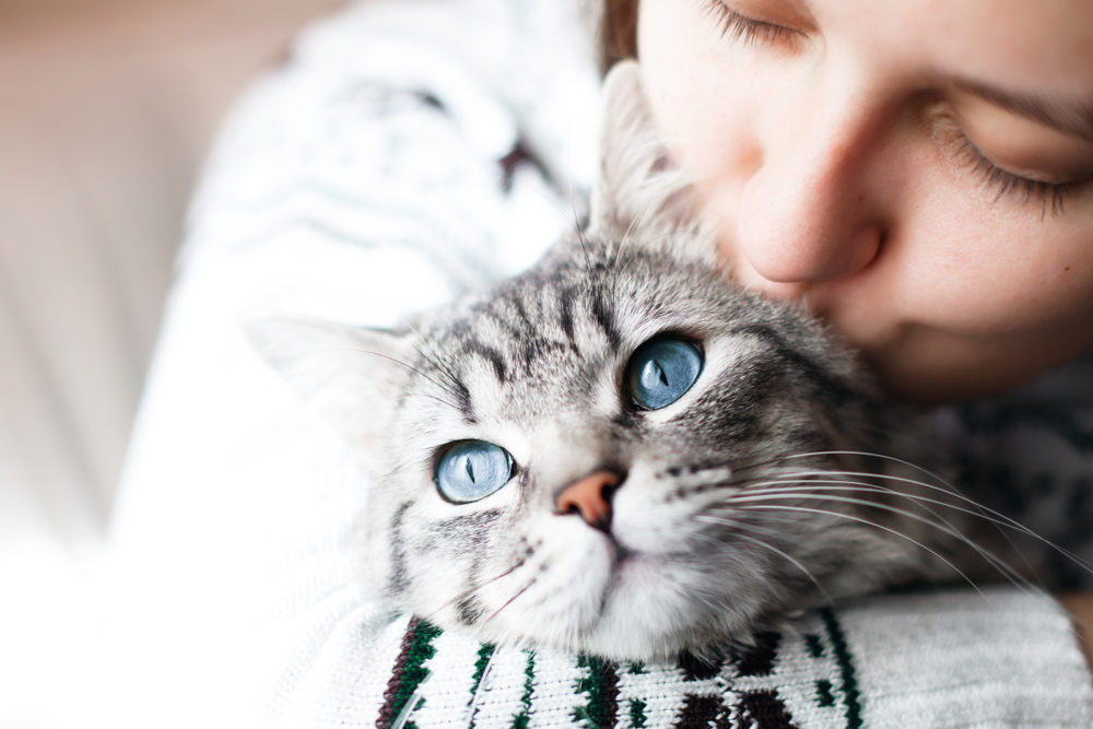 In Belgium, a cat first became infected with a human coronavirus