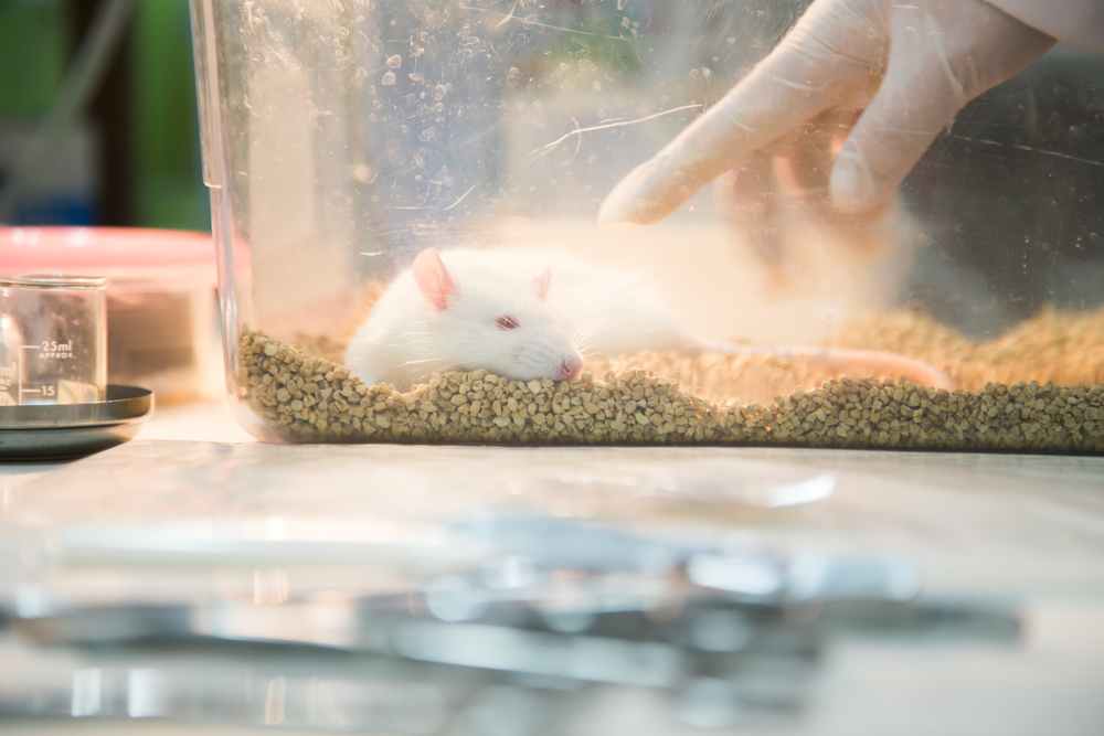 Lab mice euthanized in USA due to lack of researchers