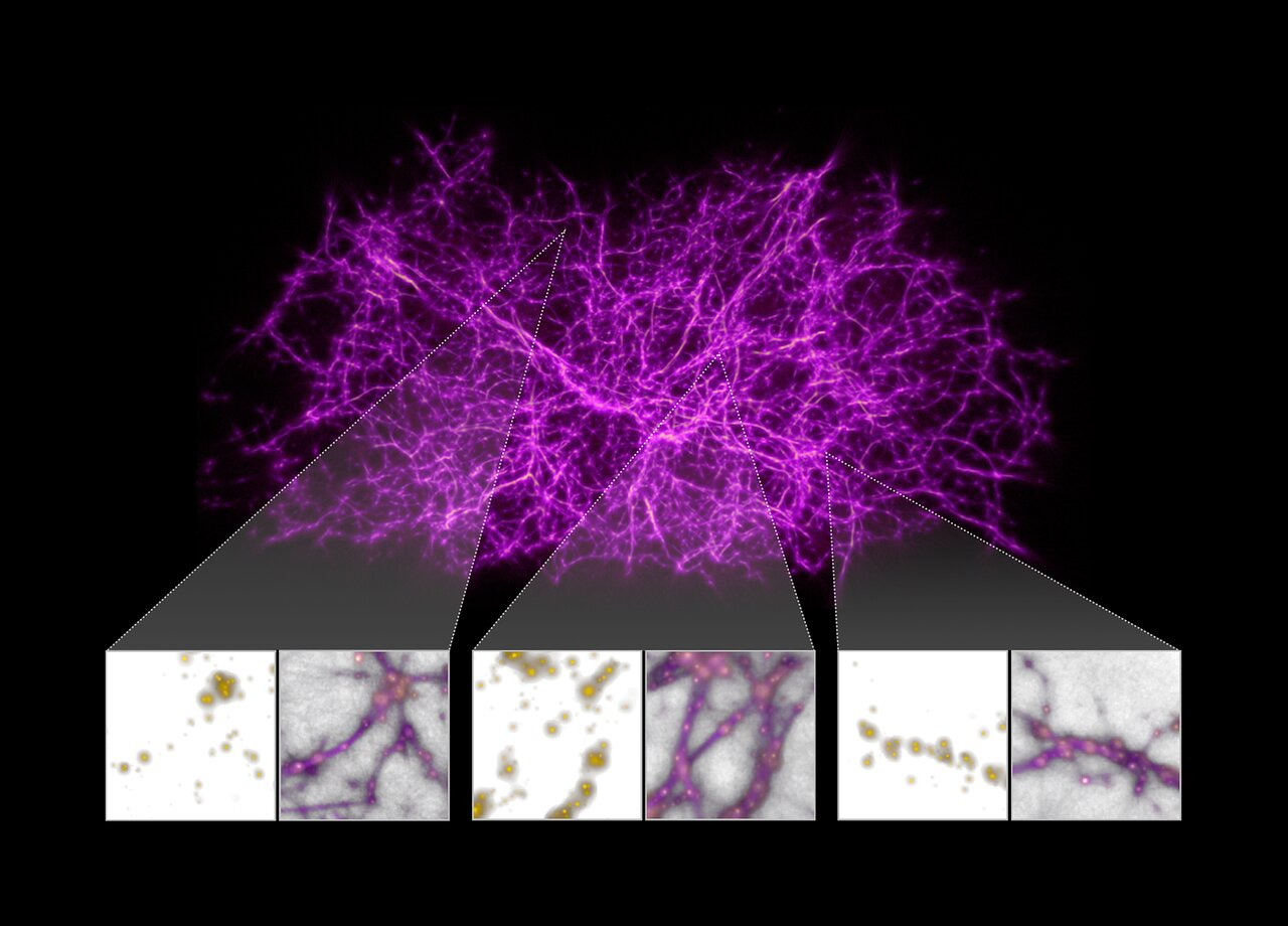 Mucous mold helped map the most complex structures in the universe
