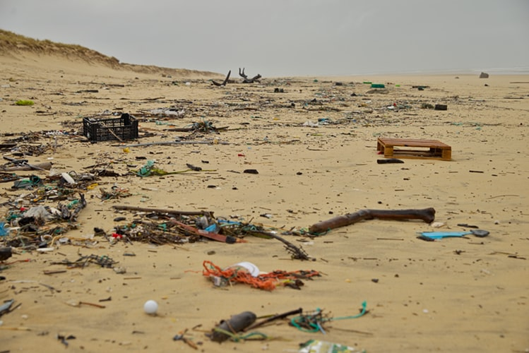 Scientists have determined the size of plastic that animals can swallow