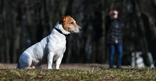 In the US, it was recommended to provide the social distance for Pets