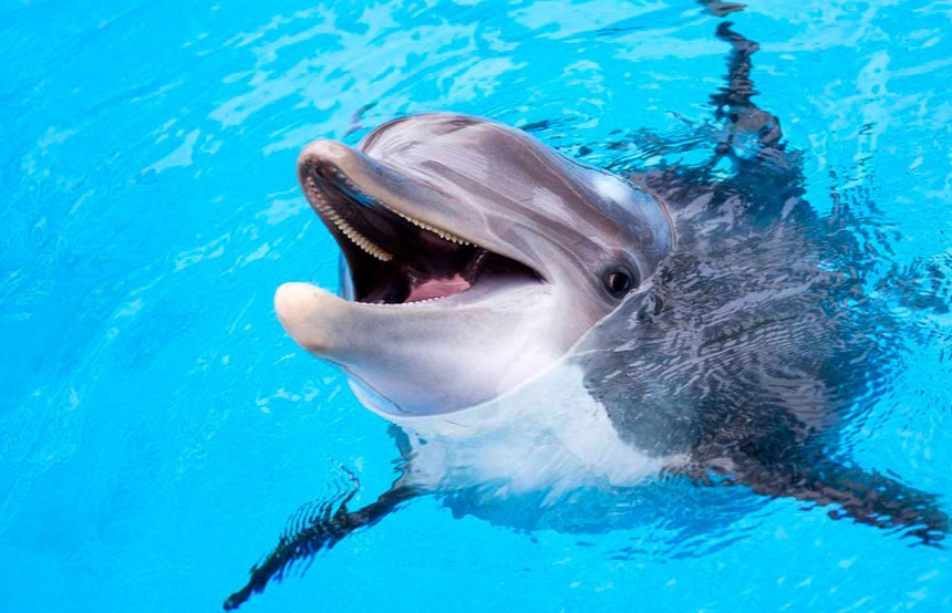 Dolphins are more likely to get a stomach ulcer due to parasitic worms