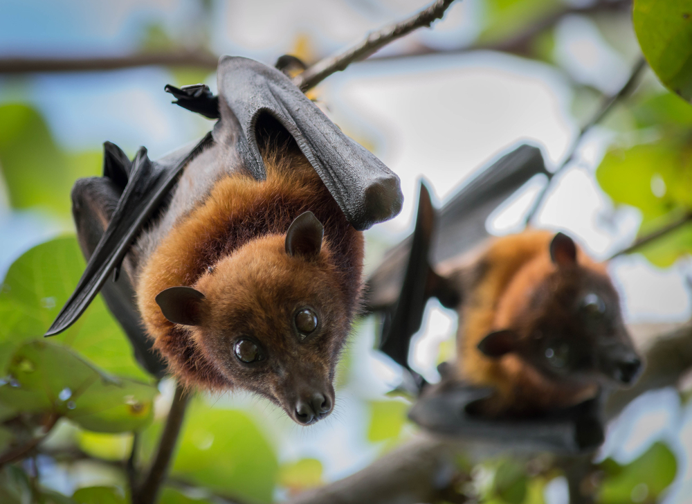 Scientists have discovered six new types of coronavirus in bats