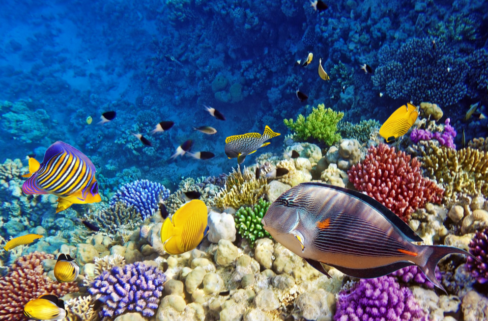 Research: People can restore ocean ecosystems by 2050