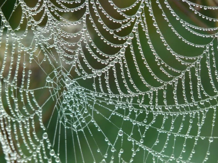 Despite its amazing properties, stumbling on a web and especially in the forest is as unpleasant as possible